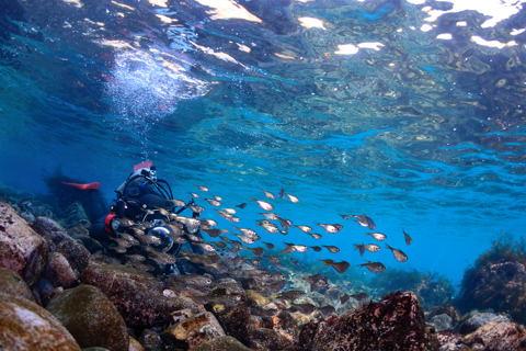 20110118hatanpo_diver