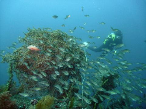 20111113kurohosi_diver