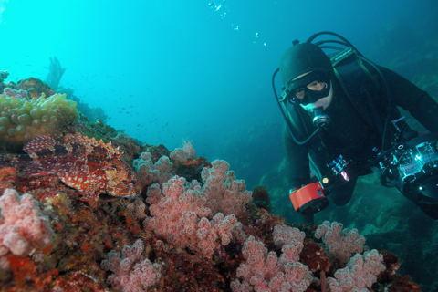 20111125kasago_diver
