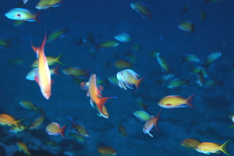 20120115kingyohanadai_1