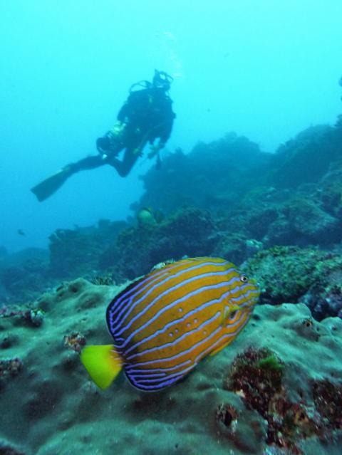 20120129kintyakudai_diver