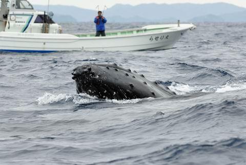 クジラの画像 p1_18