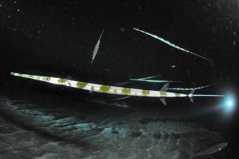 20121214aoyagara