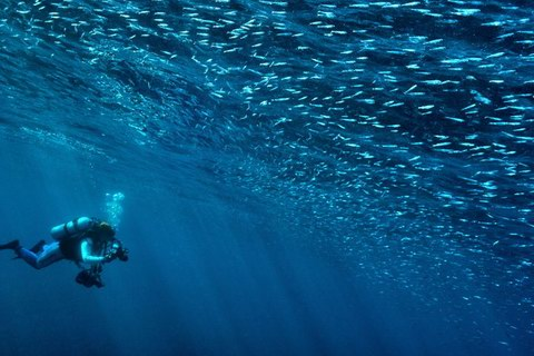 20121216iwasi_diver