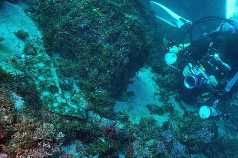 20121219hirame_diver