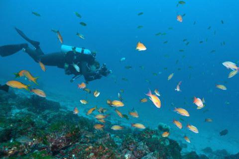 20121224kingyohanadai_diver
