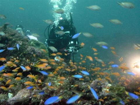 20131102kingyohanadai_diver
