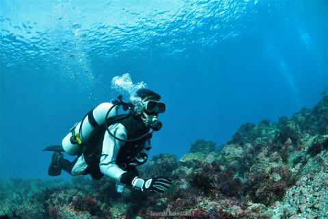 20131228_diver