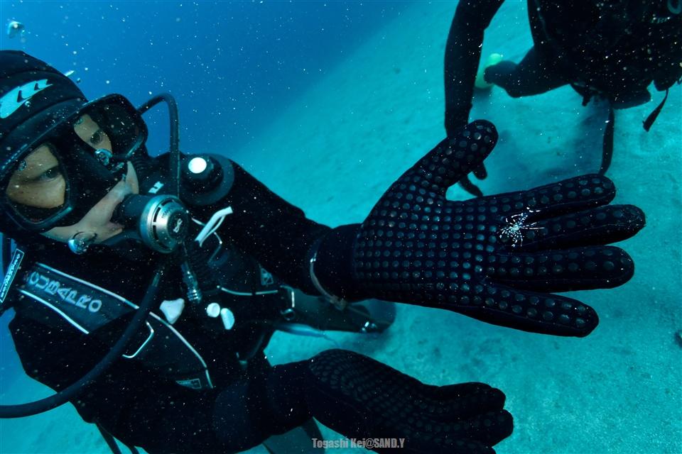 20151230bentenkomonebi_sp_diver
